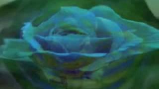 Project Pitchfork • Steelrose • Album Version •Music Video