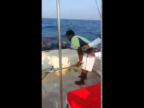 BLUE WATERS sport fishing @ the reef of the chennai coast, king Mackeral Catch