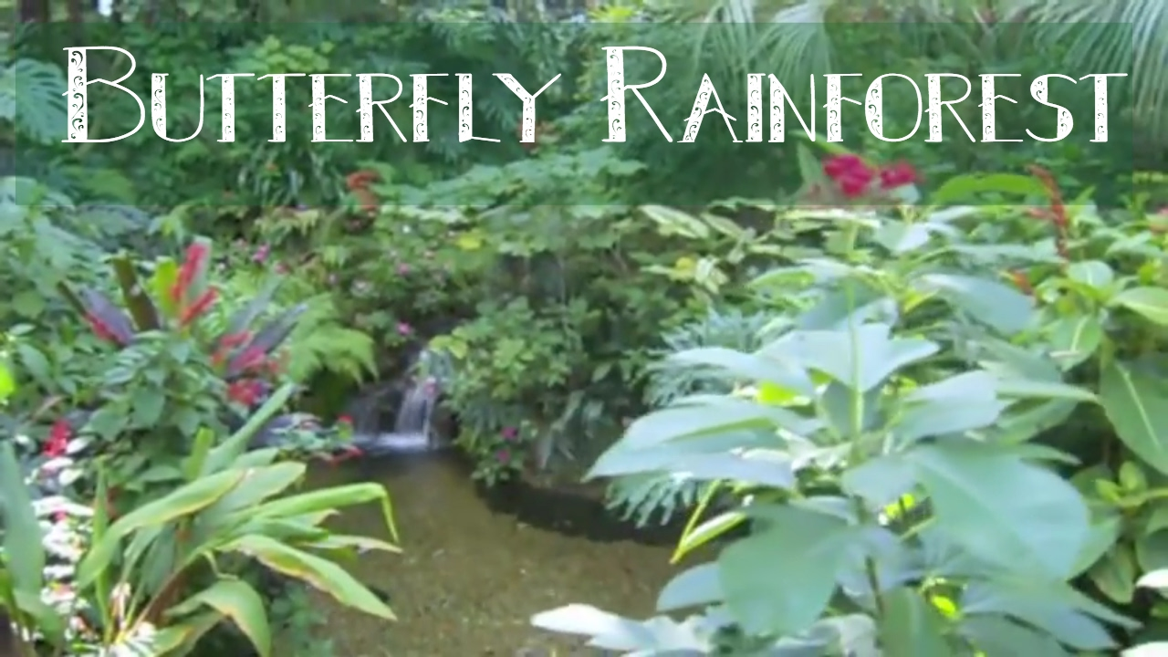Butterfly Rainforest Florida Museum Of Natural History Youtube