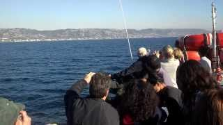 Whale Watching In Newport Thumbnail