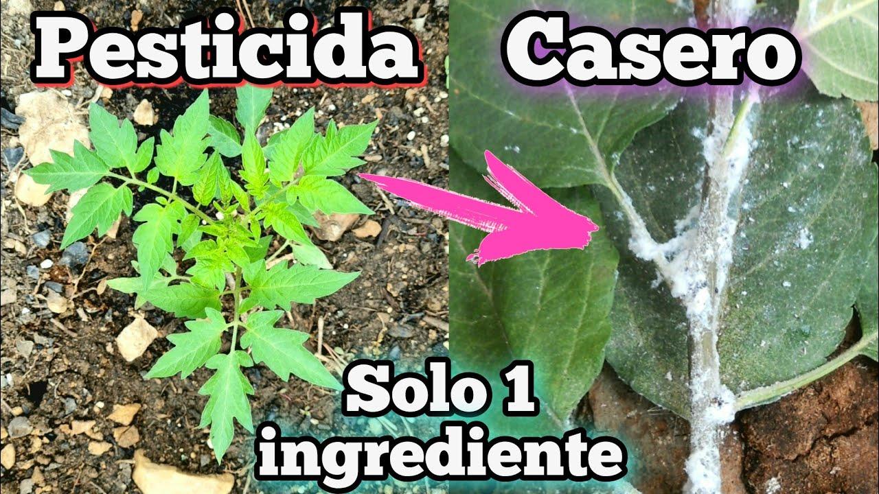 APRENDE a COMO HACER este PESTICIDA casero para PLANTAS! Remedio natural para el PULGÓN en el Jardín