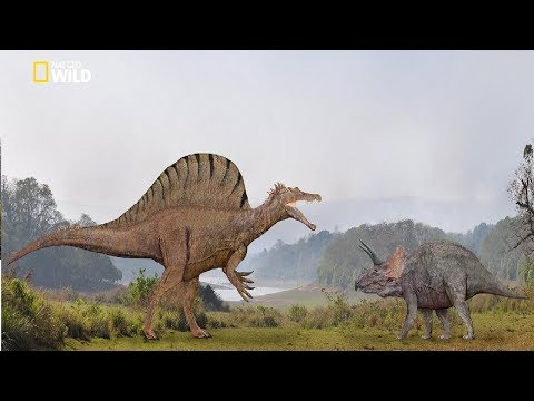 National Geographic - Spinosaurus Dinosaur Bigger Than T. Rex - New Documentary HD 2018