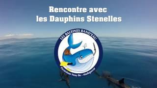 Rencontre avec les dauphins_Les Baleines Rand'eau 2017