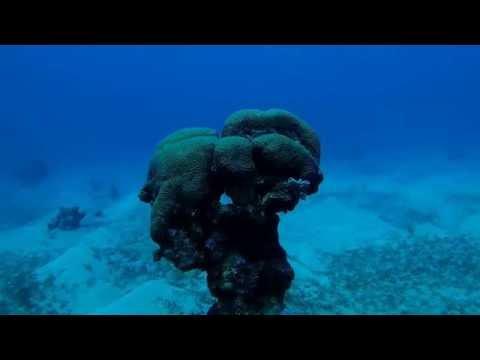 Dekel Beach Red Sea