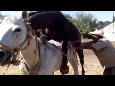 Bedækning video heste Top 5: