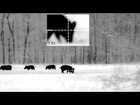 7 Hogs Down with the Pulsar Trail XP50 and XQ38   How to Make Pig Pipes