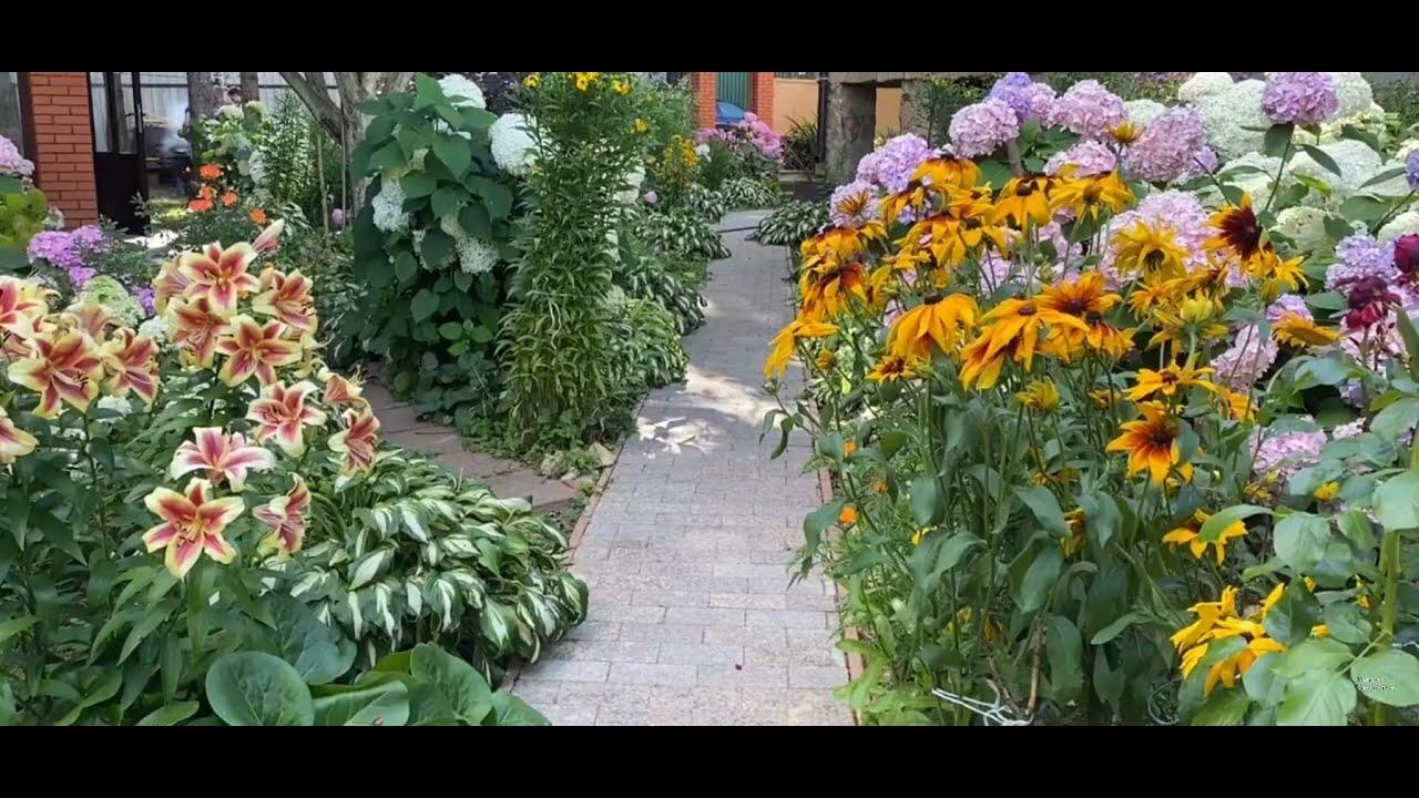 Вот и лето прошло / чем порадовал меня мой прекрасный сад