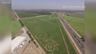 World's Largest Corn Maze At Cool Patch Pumpkins In Dixon, Ca