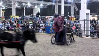 Chariot Races at Novi Expo November 2013