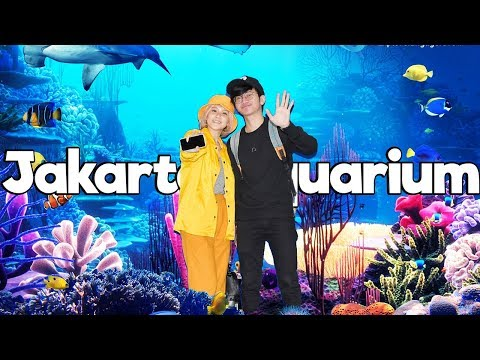 Grace Vlog - Jakarta Aquarium