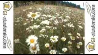 016 - Лечебные растения.