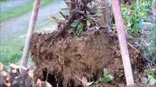 Pbf support palan v2 - Comment tuer un arbre sans le couper ...