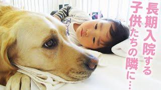 難病の子を支えるワンコ。東京の病院で初めて導入されたファシリティ・ドッグの1年間