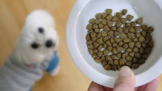 DOG&CAT LIFE - Dog FOOD, G…