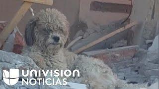 Una mascota sufre las consecuencias del terremoto en Ecuador