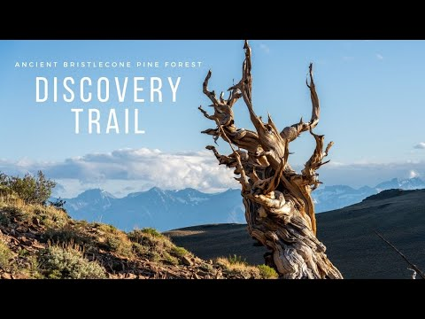 Discovery Trail in the Ancient Bristlecone Pine Forest off Highway 395