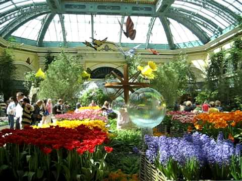 Real Live Butterflies   Conservatory And Botanical Gardens, Bellagio Hotel,  Las Vegas NV