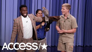 Kevin Hart Hilariously Loses It Over Exotic Animals With Robert Irwin On 'The Tonight Show' | Access