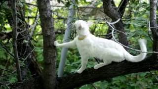 Cats adventures: in the apricot tree | Приключения котов: на абрикосовом дереве