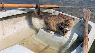 Отобрал рыбу у мамы-кошки