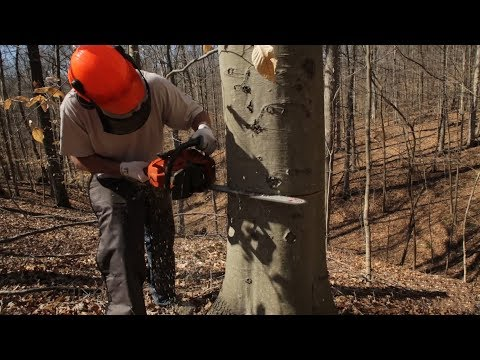 Hinge Cutting And Girdling Trees To Improve Your Habitat - The Management Advantage