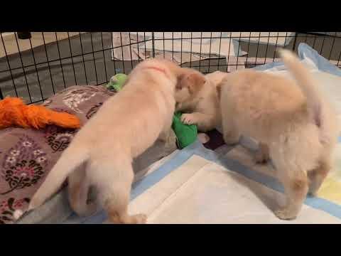The puppies return.