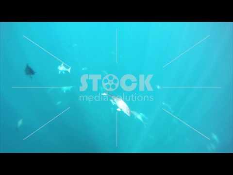 Panama City-Underwater fish-HD-OVERLAY_2