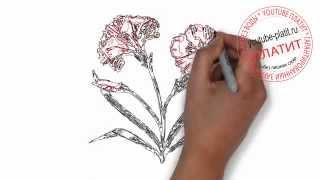 Нарисованные цветы  Как нарисовать карандашоми куст гвоздики