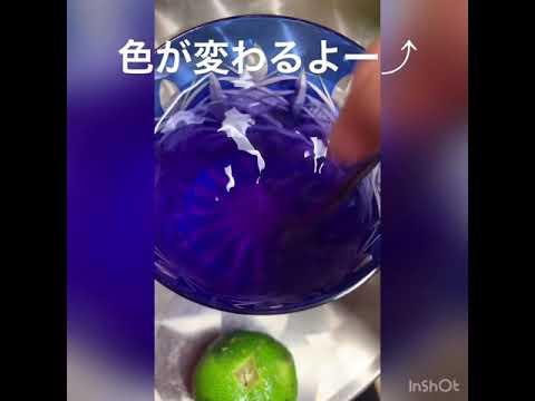 バタフライピー 青いお茶実験映像