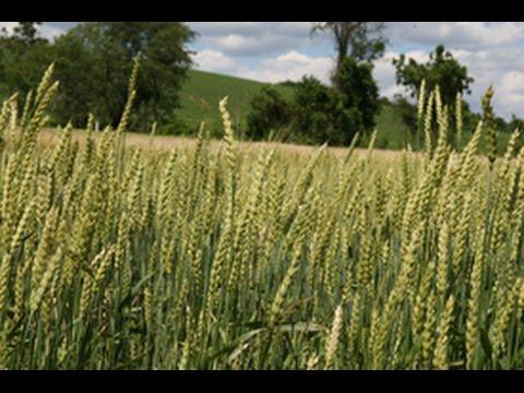 Managing for Soil Health on an Organic Farm - A Farmer's Perspective