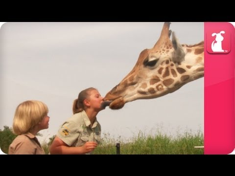 Thumbnail: Bindi & Robert Irwin feature - Giraffes (Rosie and Forest) - Growing Up Wild