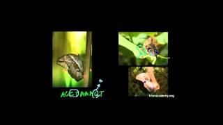 Doğal Seleksiyon ve Baykuş Kelebeği (Biyoloji / Yaşam Ağacı)