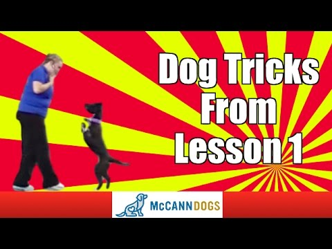 Kayl McCann Demonstrating A Couple Of Dog Tricks In Lesson 1
