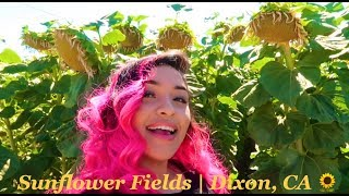 Vlog #1 Sunflower Fields In Dixon, Ca 🌻