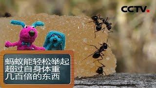 [智慧树]道哥和摩尔:蚂蚁|CCTV少儿