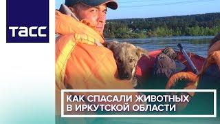 Как спасали животных в Иркутской области