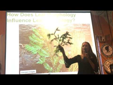 Crown Ecology in Tall Sitka Spruce Trees  by Dr. Lucy Kerhoulas