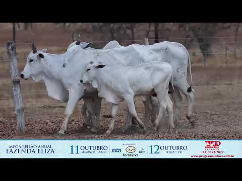 LOTE 220