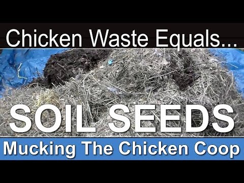 Muck The Coop and Build Soil