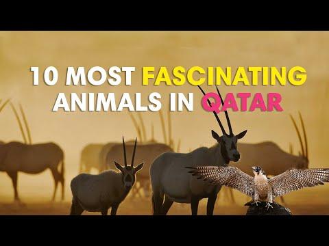 10 most fascinating animals in Qatar
