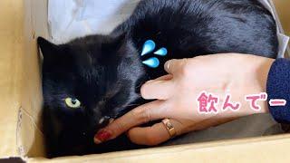 保護した野良猫に猫風邪のお薬あげるのって大変…