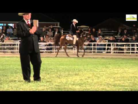 Missouri Fox Trotter Amateur Owned 3 years  WGC Ava 2014