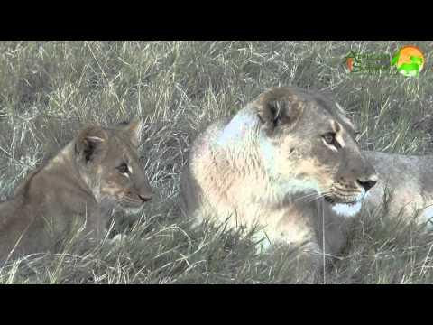 16-day Journey to Botswana (2014)