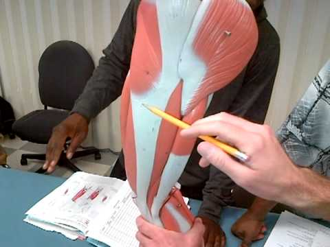 anatomy for physical therapist assistant