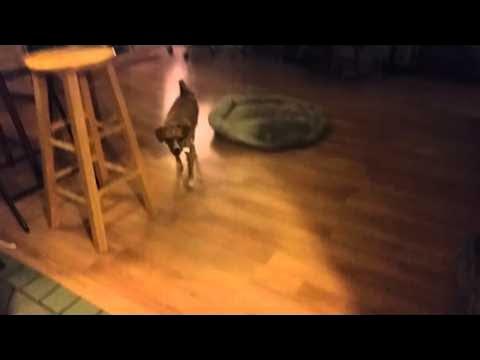 Smart Dog Gets Owner a Lighter