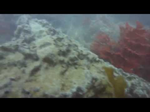 PART 2 CRD sewage outfall pollution in Victoria, BC