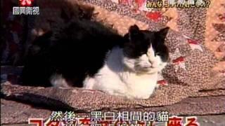 寵物當家 - 貓咪 vs. 暖桌