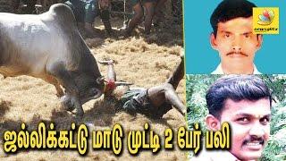 2 Killed, 50 Injured in Jallikattu at Pudukottai   Latest Tamil News