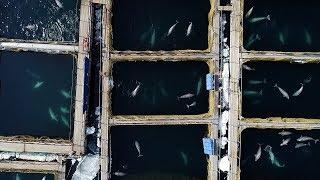 История «китовой тюрьмы» в Приморье