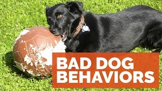 Michael Ellis On Bad Behavior In Our Dogs